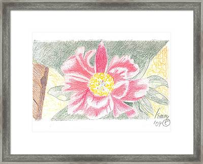Single Pink Peone - 2 Framed Print