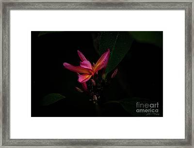 Single Red Plumeria Bloom Framed Print
