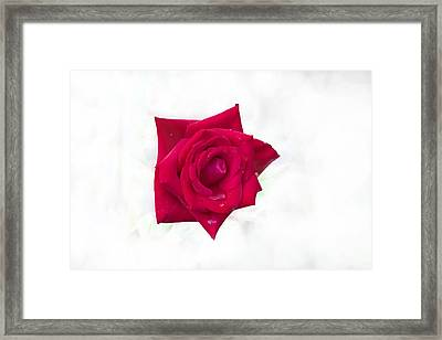 Single Red Rose Framed Print