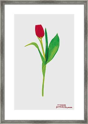 Single Red Tulip Framed Print by James M Thomas
