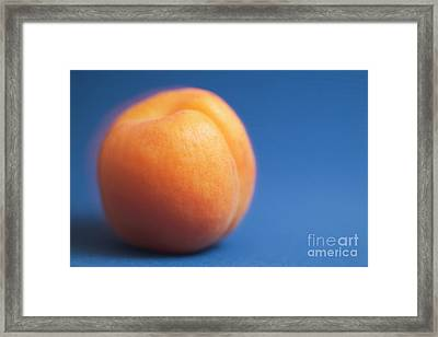 Single Ripe Apricot Ready To Eat Framed Print by Sami Sarkis