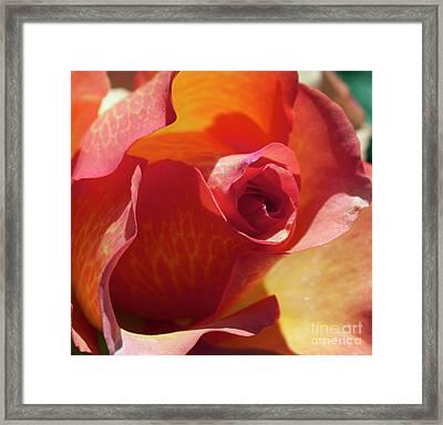 Single Rose Framed Print by Gwyn Newcombe