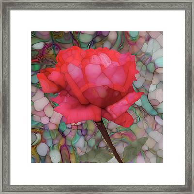 Single Rose Framed Print by Jack Zulli