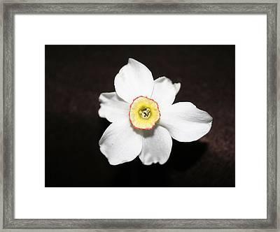 Single Spring Flower Framed Print by Susan Pedrini