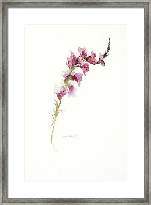 Framed Print featuring the painting Single Stem Snapdragon by Sandra Strohschein