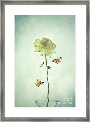 Single Stem White Rose Framed Print
