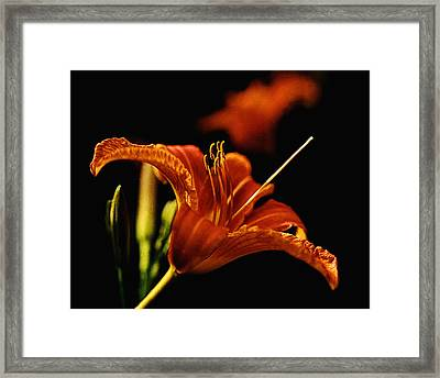 Single Tiger Lily Framed Print by Roger Soule