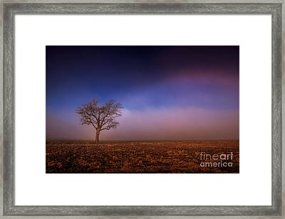 Single Tree In The Mississippi Delta Framed Print