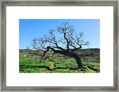 Single Tree Over Narrow Path Framed Print