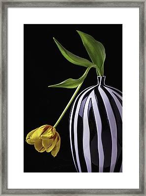 Single Tulip In Vase Framed Print by Garry Gay