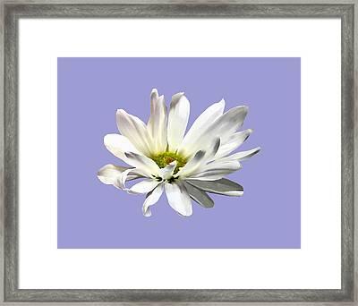 Single White Daisy Framed Print by Susan Savad