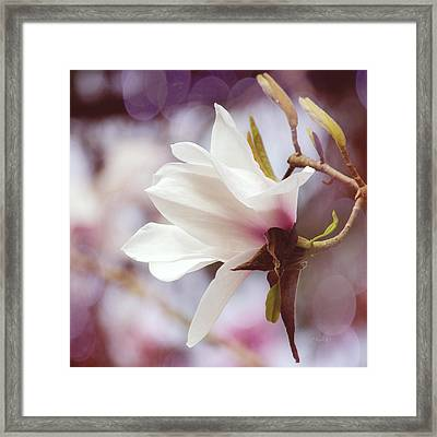 Single White Magnolia Framed Print