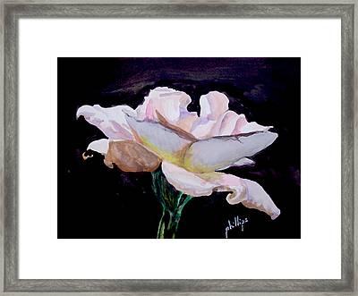 Single White Rose Framed Print by Jim Phillips