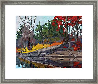 Singleton Autumn Framed Print by Phil Chadwick