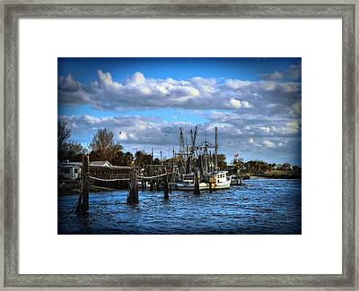 Framed Print featuring the photograph Singletons by Linda Olsen