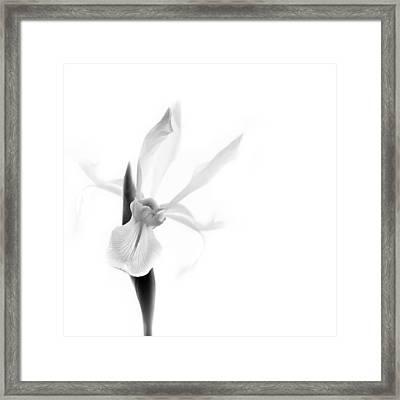 Singular Black And White Framed Print