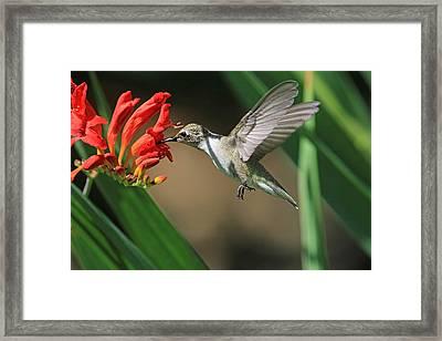 Sip-sip-hooray Framed Print