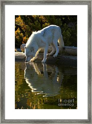 Sipping From The Pond Framed Print