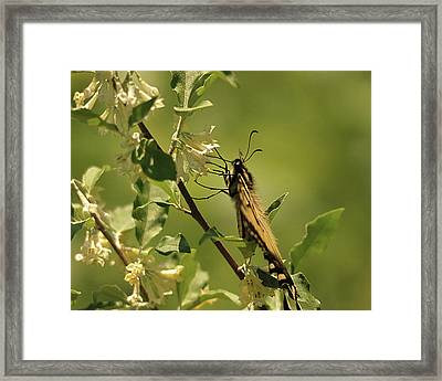 Framed Print featuring the photograph Sipping In The Shade by Susan Capuano