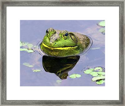 Sir Bull Frog Framed Print