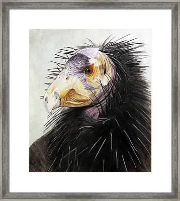 Sir Condor Framed Print by Jodi Schneider