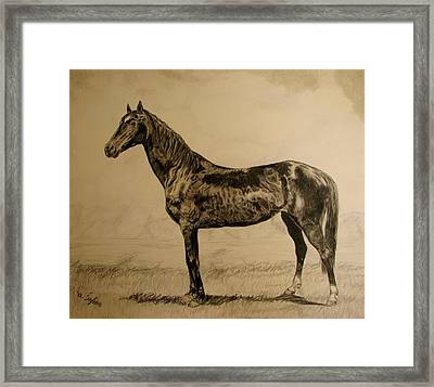 Framed Print featuring the drawing Sisi by Melita Safran