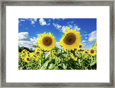 Framed Print featuring the photograph Sisters by Greg Fortier