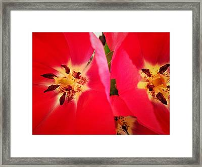 Framed Print featuring the photograph Sisters by Olivier Calas