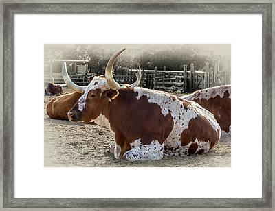 Sitting Bull Framed Print by Kelley King