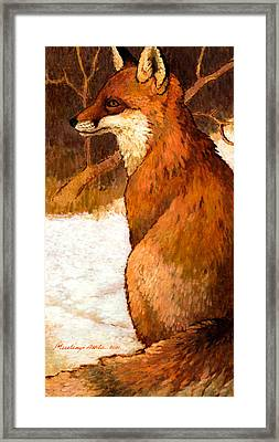 Sitting Fox Framed Print