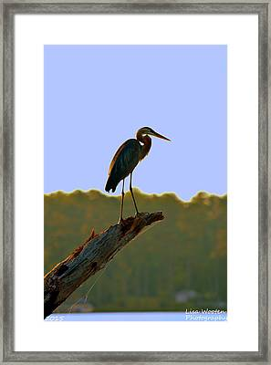 Sitting High On The Log Framed Print
