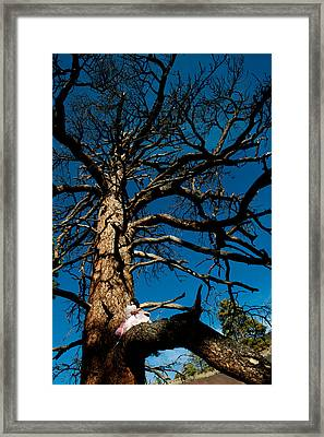 Sitting In Tree 2 Framed Print by Scott Sawyer