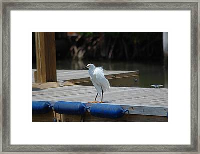 Sitting On The Dock Of The Bay Framed Print by Clay Peters Photography