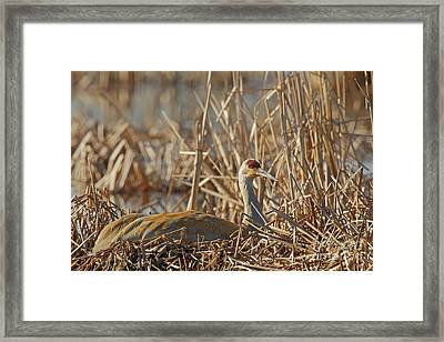 Sitting On The Nest Framed Print by Natural Focal Point Photography