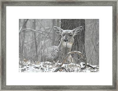 Framed Print featuring the photograph Sitting Out The Storm by Michael Peychich