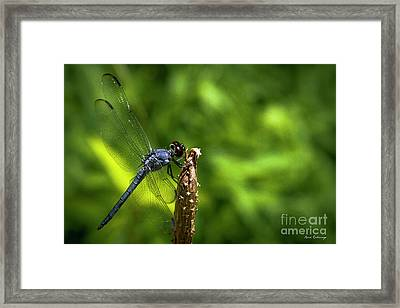 Framed Print featuring the photograph Sitting Pretty 2 Dragonfly Art by Reid Callaway