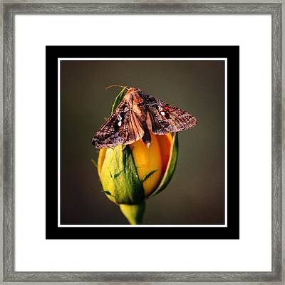Sitting Pretty Framed Print by KayeCee Spain