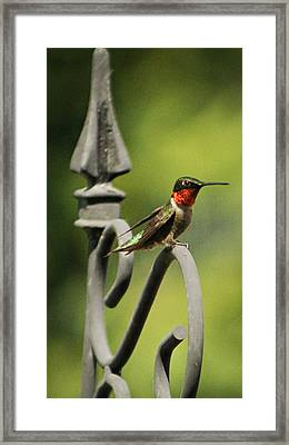 Sitting Pretty Framed Print by Sarah Boyd