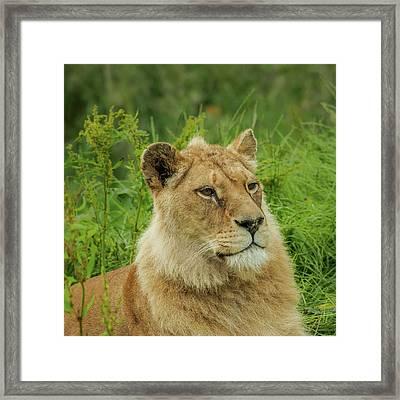 Sitting Proud Framed Print
