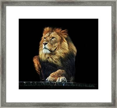 Sitting Proud Framed Print by Martin Newman