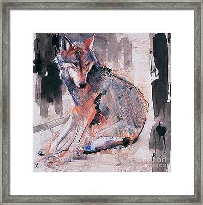 Sitting Wolf Framed Print by Mark Adlington