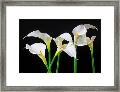 Six Calla Lilies Framed Print