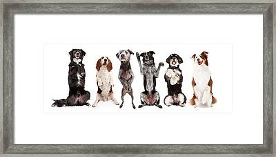 Six Dogs Standing Forward Together Begging Framed Print