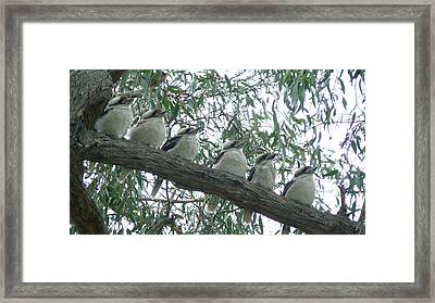 Six In A Row Framed Print by Evelyn Tambour