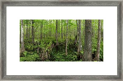 Six Mile Cypress Slough Preserve Framed Print by Panoramic Images