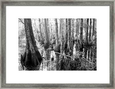 Six Mile Slough Framed Print by Steven Scott