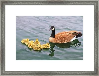 Six Of One - Half A Dozen Of The Other Framed Print by Donna Kennedy