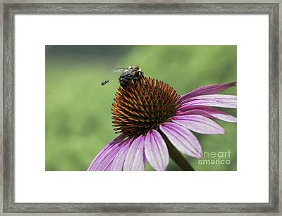 Size Matters Framed Print by Andrea Silies
