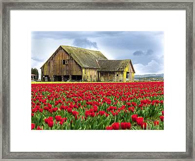 Skagit Valley Barn Framed Print