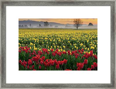 Framed Print featuring the photograph Skagit Valley Misty Morning by Dan Mihai